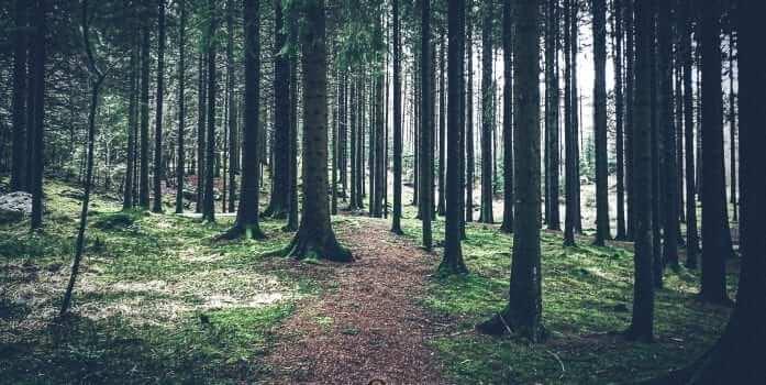 Rogaland Arboret – 2019/03